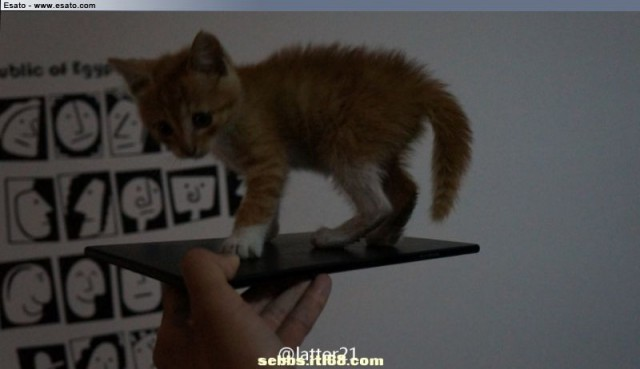 sony togari xperia zu with cat