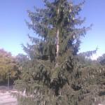 IMG_20130926_151043682