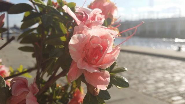 Galaxy Note 3 Camera Sample - Flower2