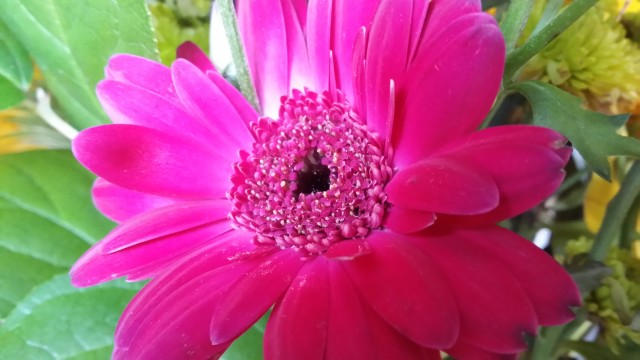 Galaxy Note 3 Camera Sample - Flower3