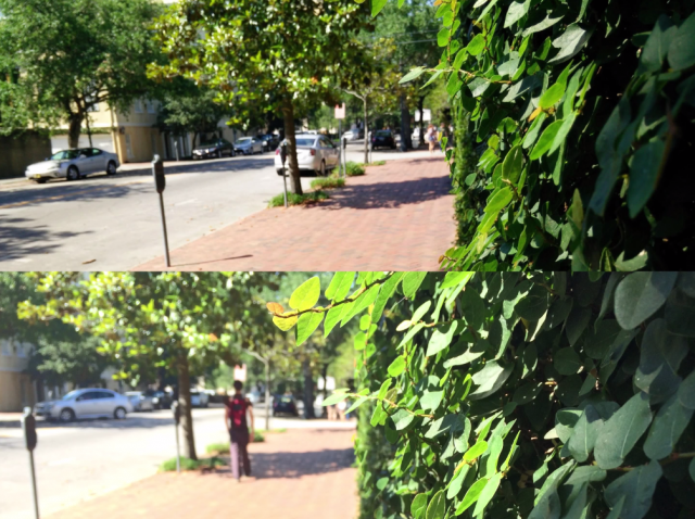 OnePlus One vs iPhone 5s camera test 2