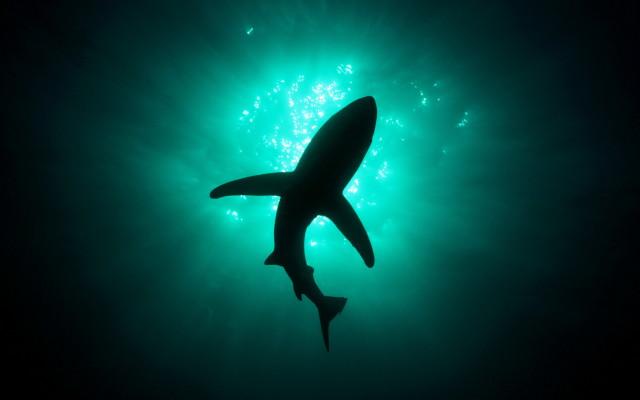 Shark From Below