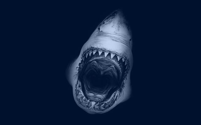Shark Yawn