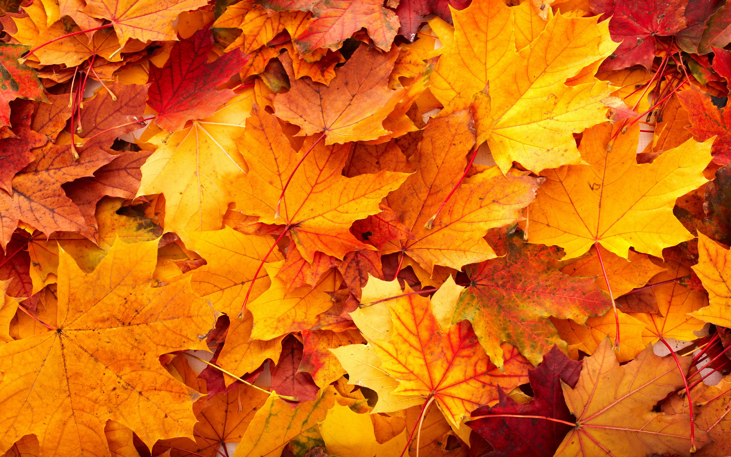 Android Wallpaper Autumn Colors