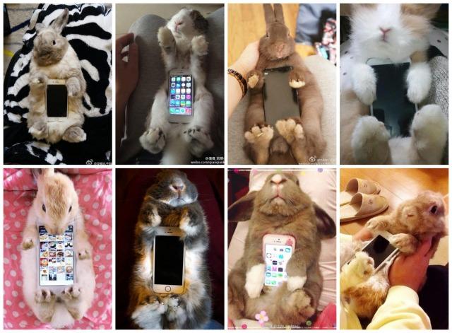 Live rabbit cases