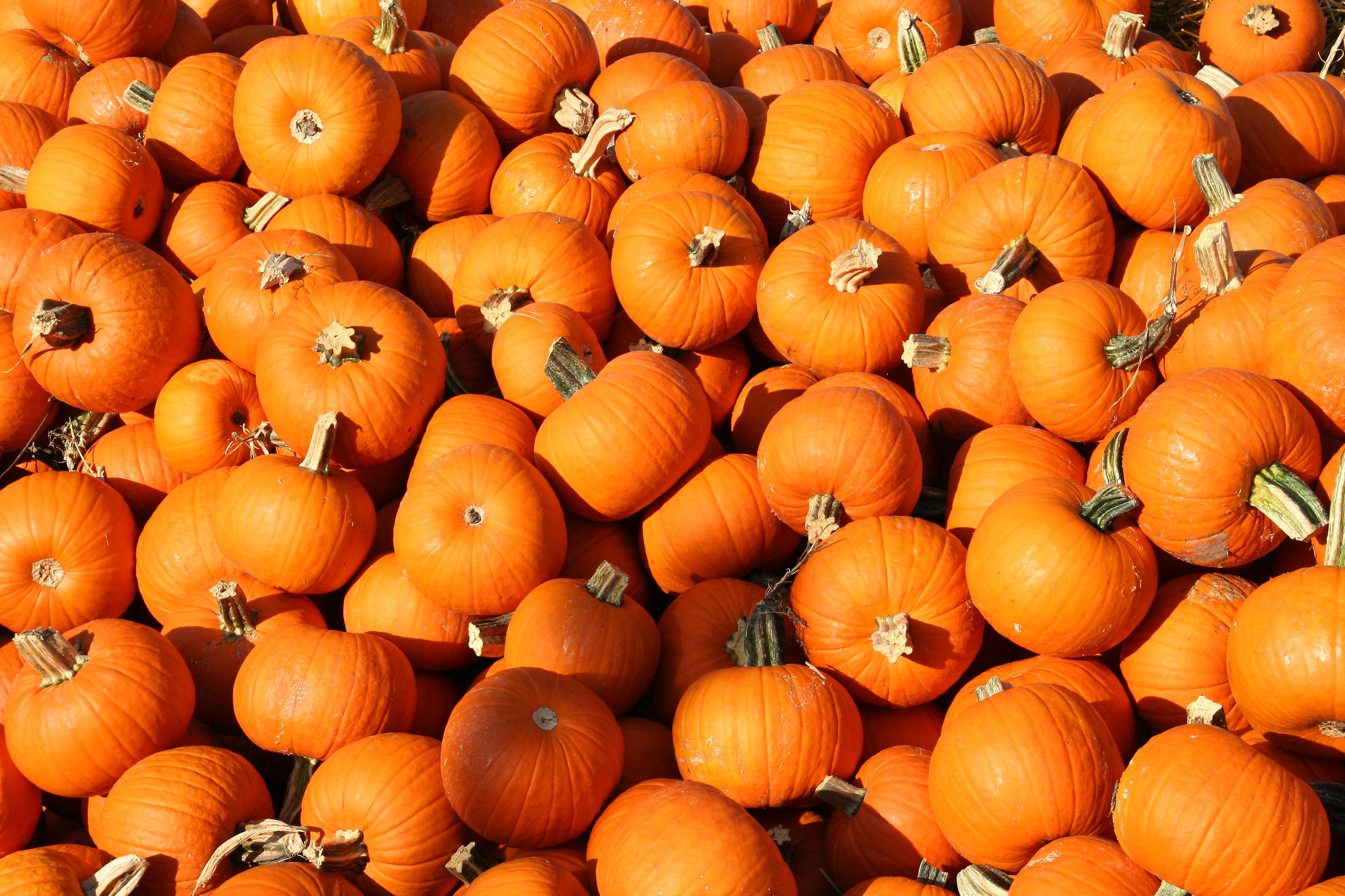 Android wallpaper fall colors - Fall wallpaper pumpkins ...