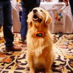 Motorola Dog Collar DSC07691