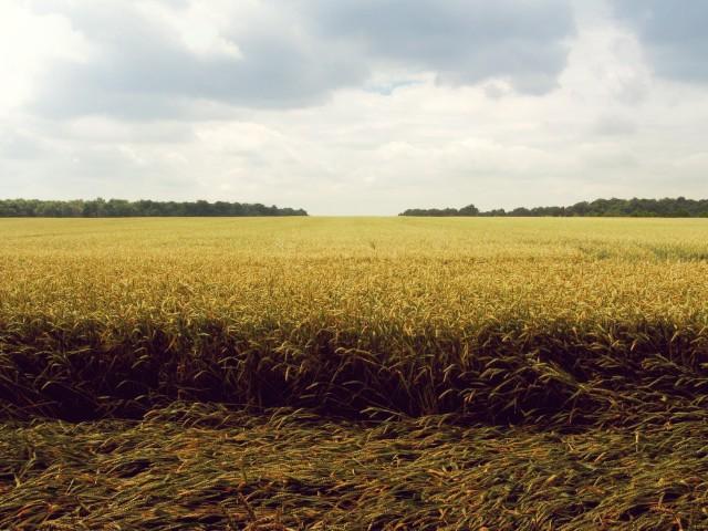 field (1)