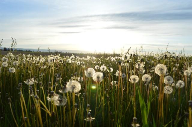 field (3)
