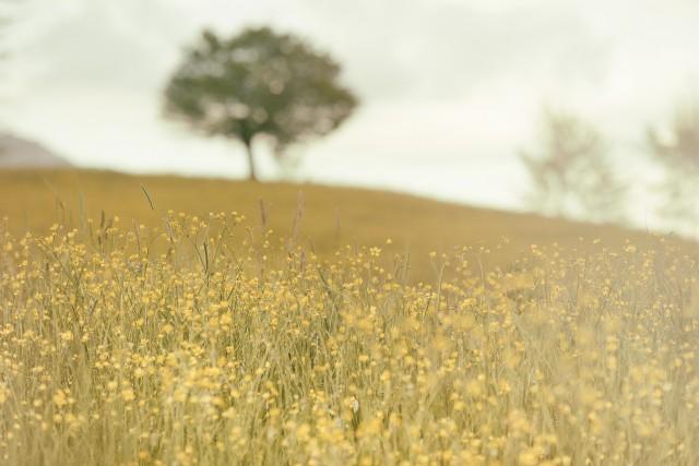 field (4)