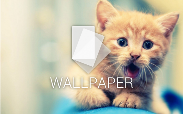 android wallpaper cat