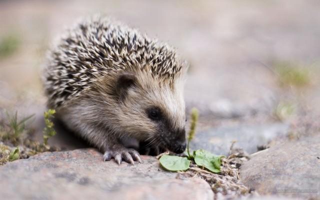 cute animals (1)