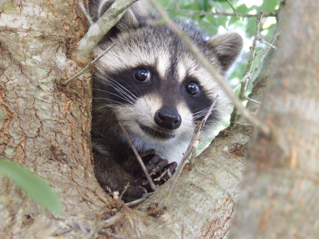 cute animals (3)