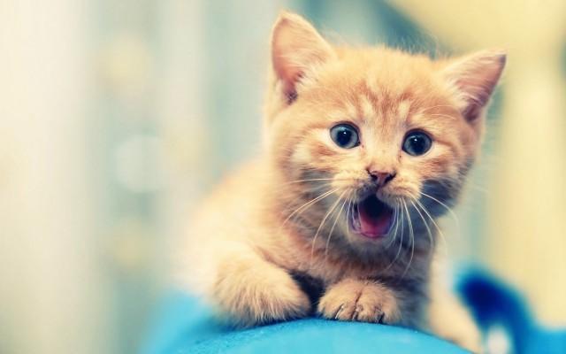 cute animals (4)