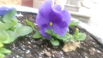 One-M9-Purple-Flower-Before