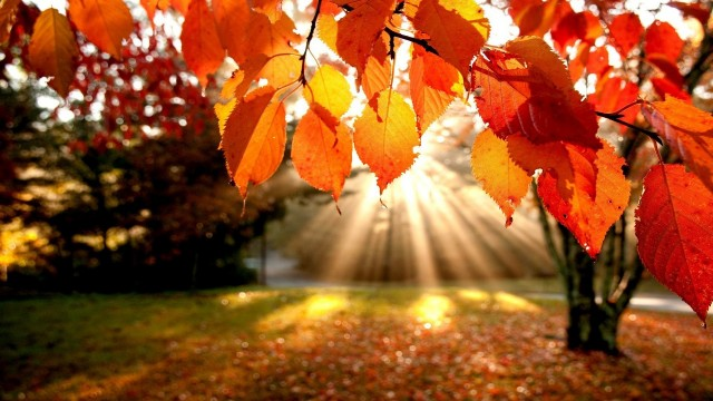 5658-autumn-sunshine