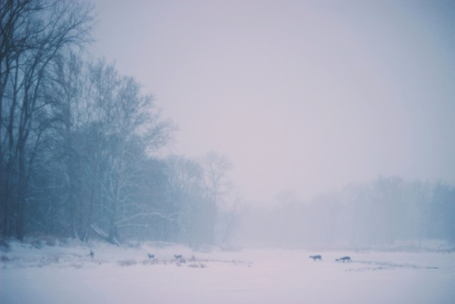 winter snow wallpaper (6)