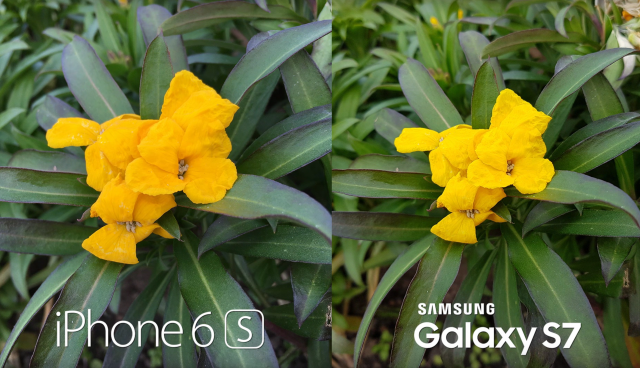 Galaxy S7 vs iPhone 6S Plus camera test