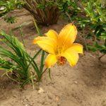 HTC 10 post camera update IMAG0040