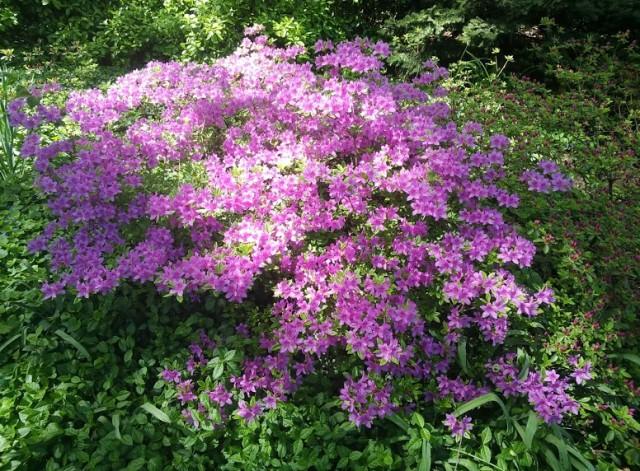 glass-central-park-flowers