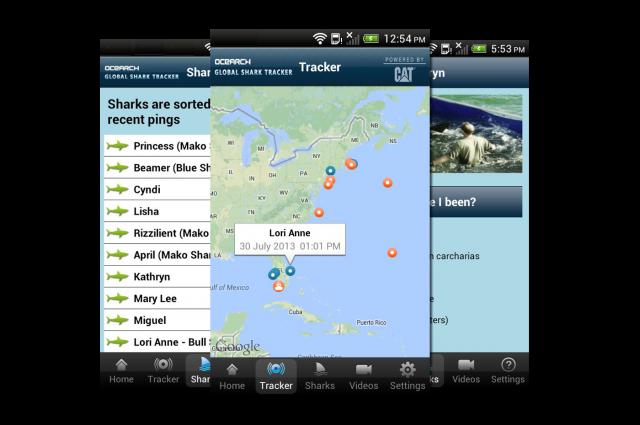 shark-tracker