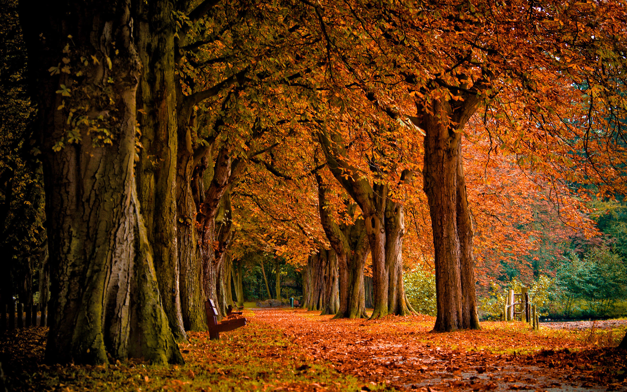 fall path a· leaves a· pumpkins a· autum trees nature landscape leaf leaves 2560x2048 local offer android wallpaper