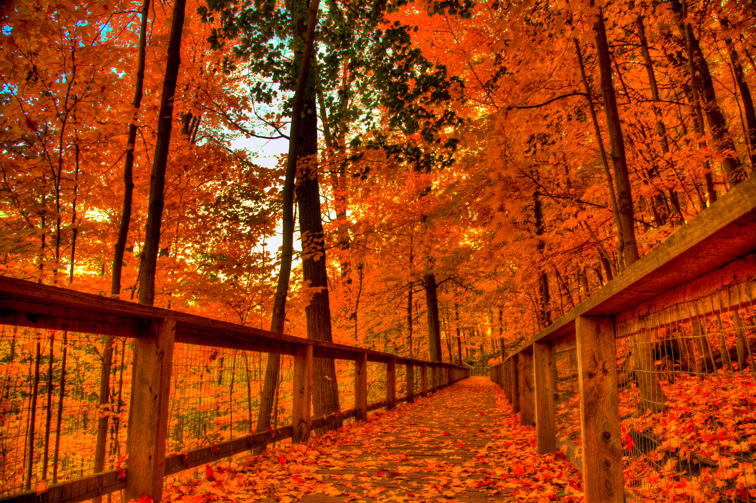 orange fall path leaves pumpkins autum trees nature landscape leaf leaves 2560x2048 local offer android wallpaper