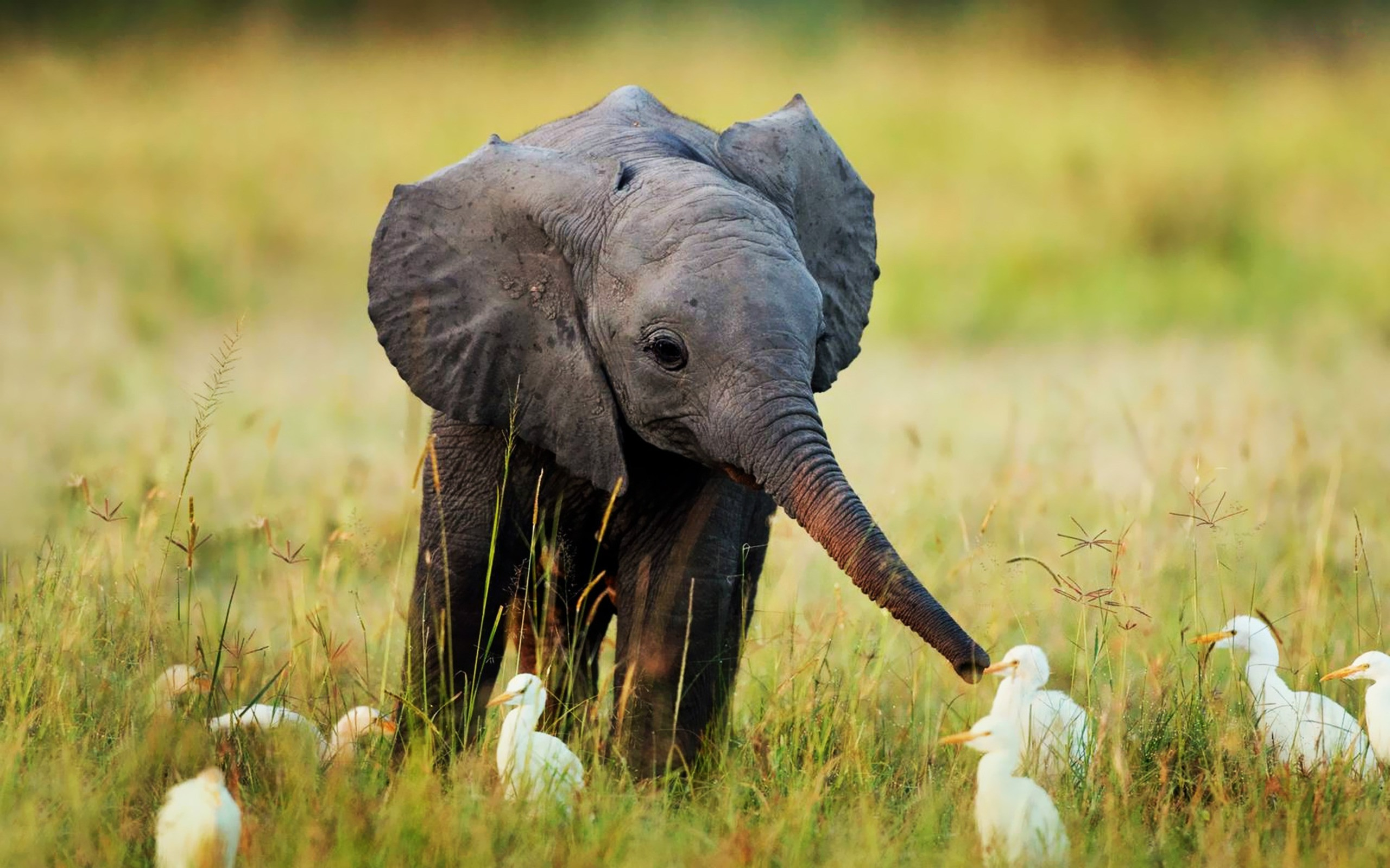 Cute Animal Wallpapers Free: Android Wallpaper: Too Cute
