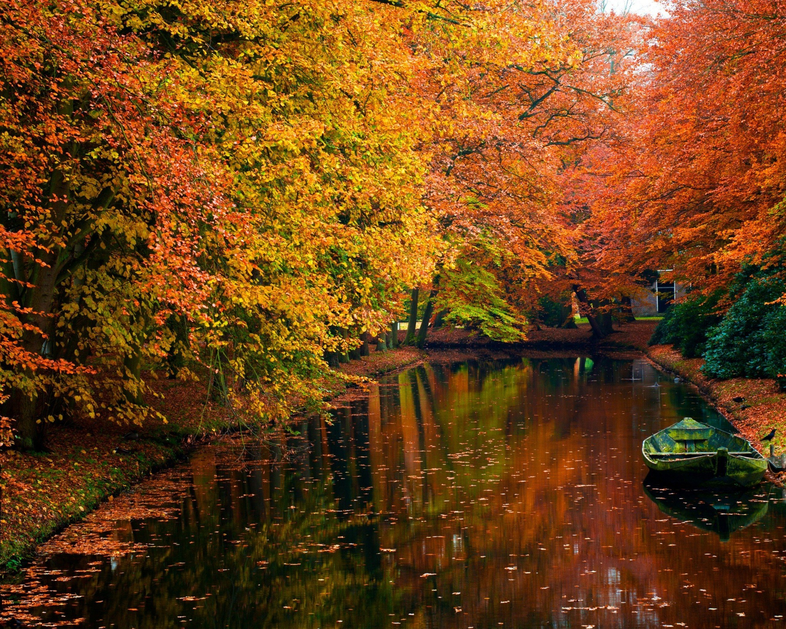 autumn landscape android nature colors leaves trees local fall tree autum leaf hd backgrounds desktop wallpapers autumnal computer wall offer