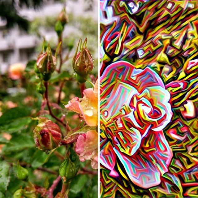 prisma_rose